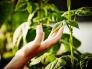 Искусственные листья способны производить больше энергии, чем обычные